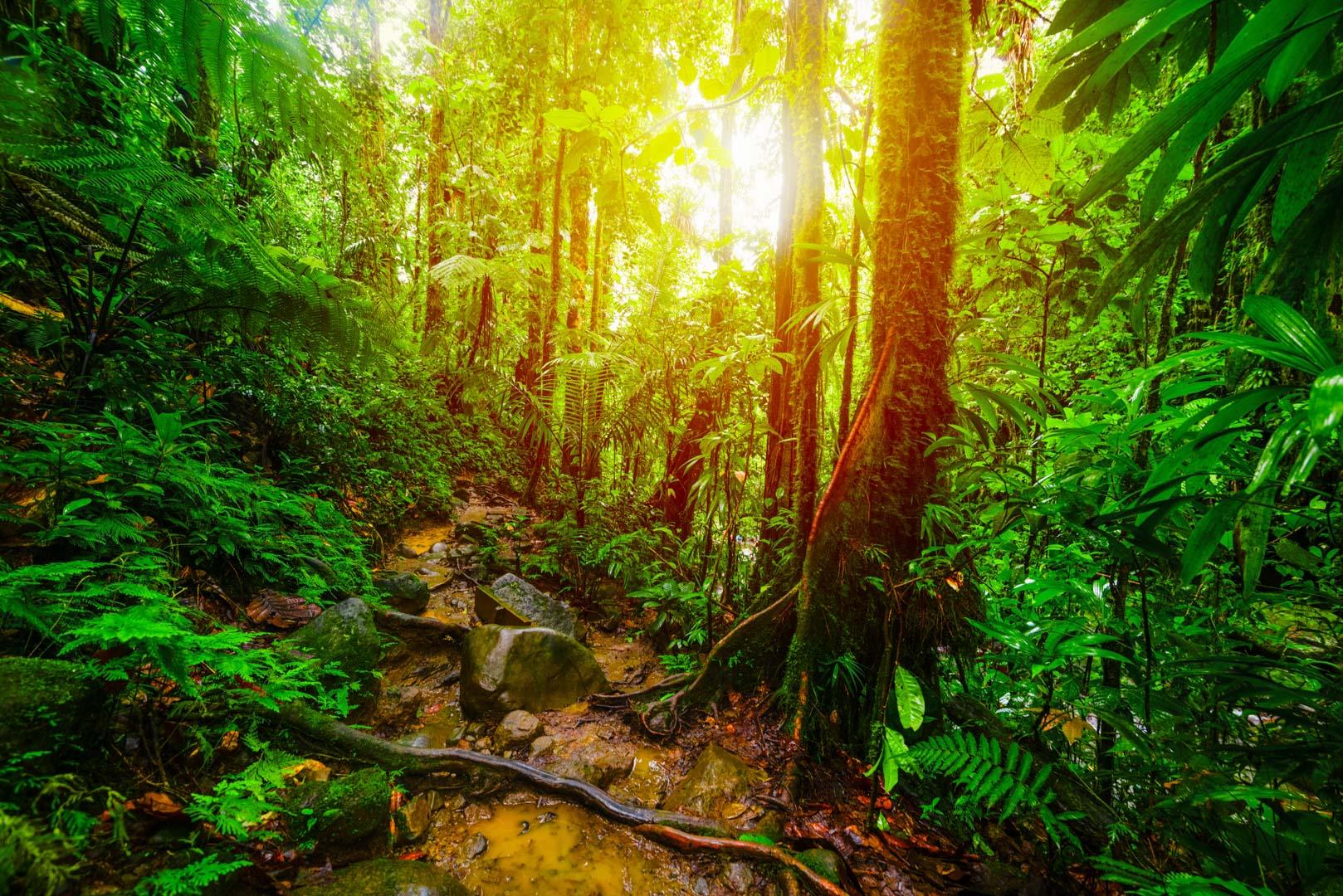 Forêt-opération de reboisement